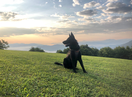 Win for Kato, the German Shepherd Search and Rescue K9 Tracker