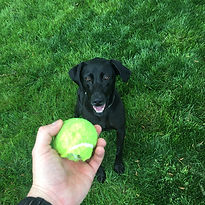 Dog Training Knoxville