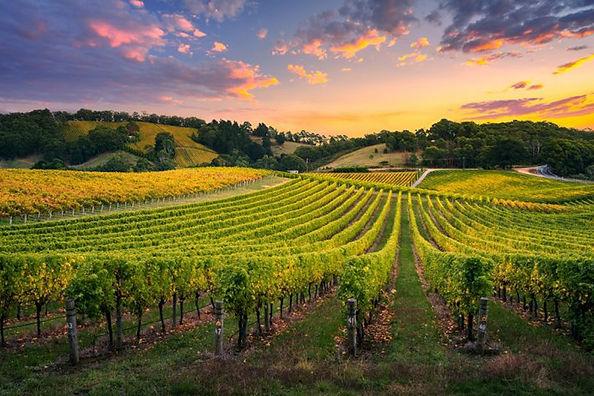 Perth-Wine-Tour-Swan-Valley-Sunset.jpg