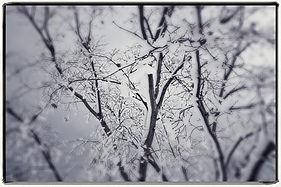 SnowPatterns_lr.jpg