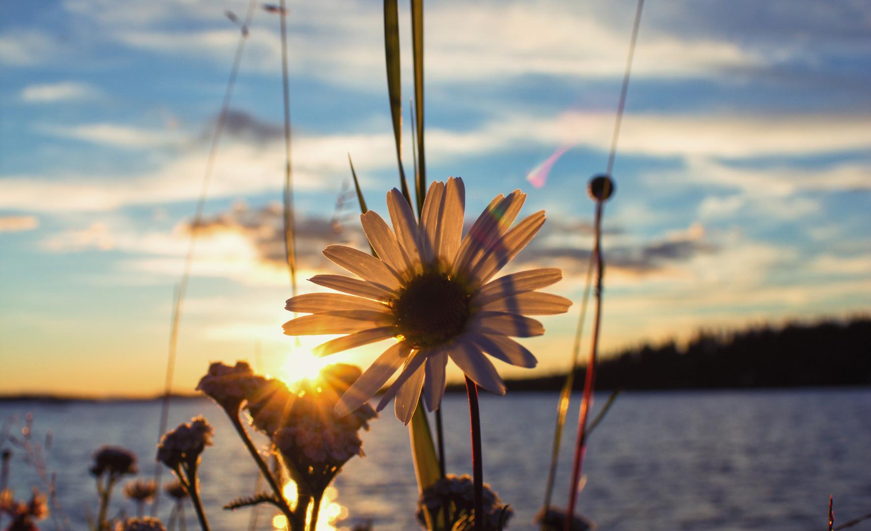 Little daisy sign.jpg