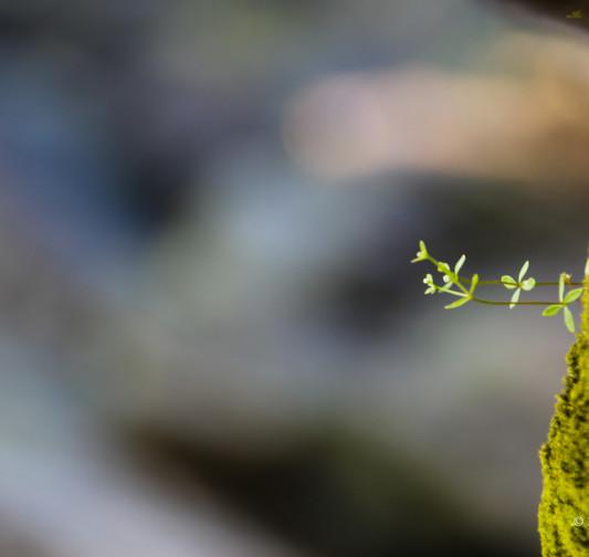 Små växter sign.jpg