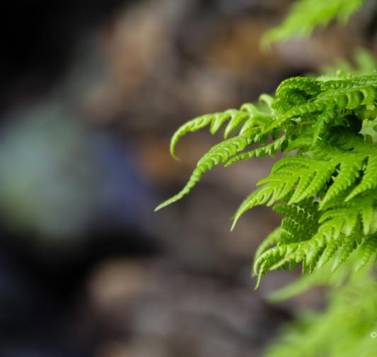 Små växter-2 sign.jpg
