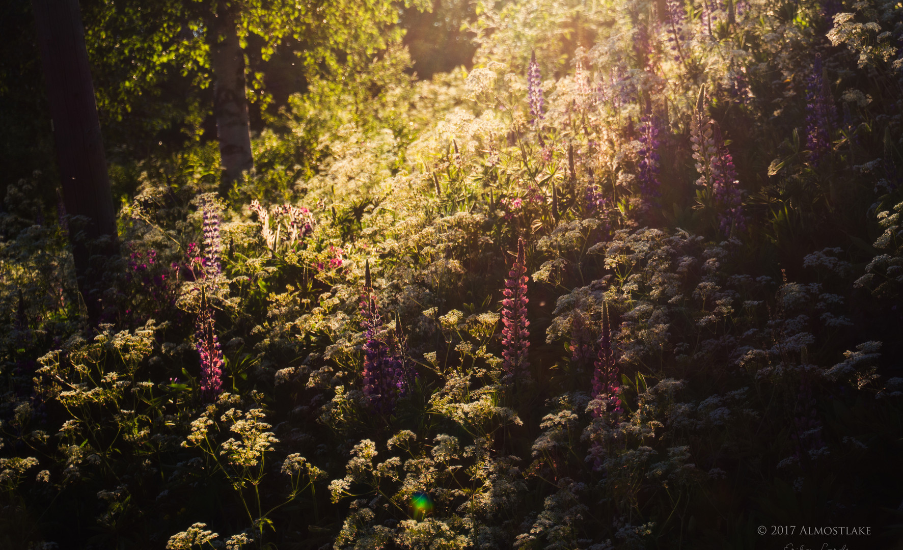 Blommor i solen sign.jpg