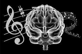 Brain development.jpg