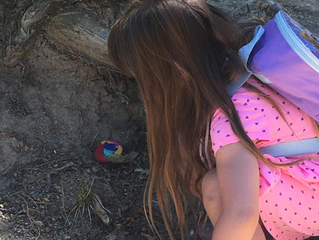 Rock Painting: Connecting communities and engaging the young and young at heart!