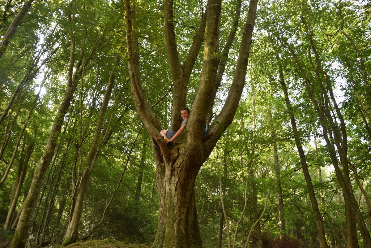 grimper dans les arbres