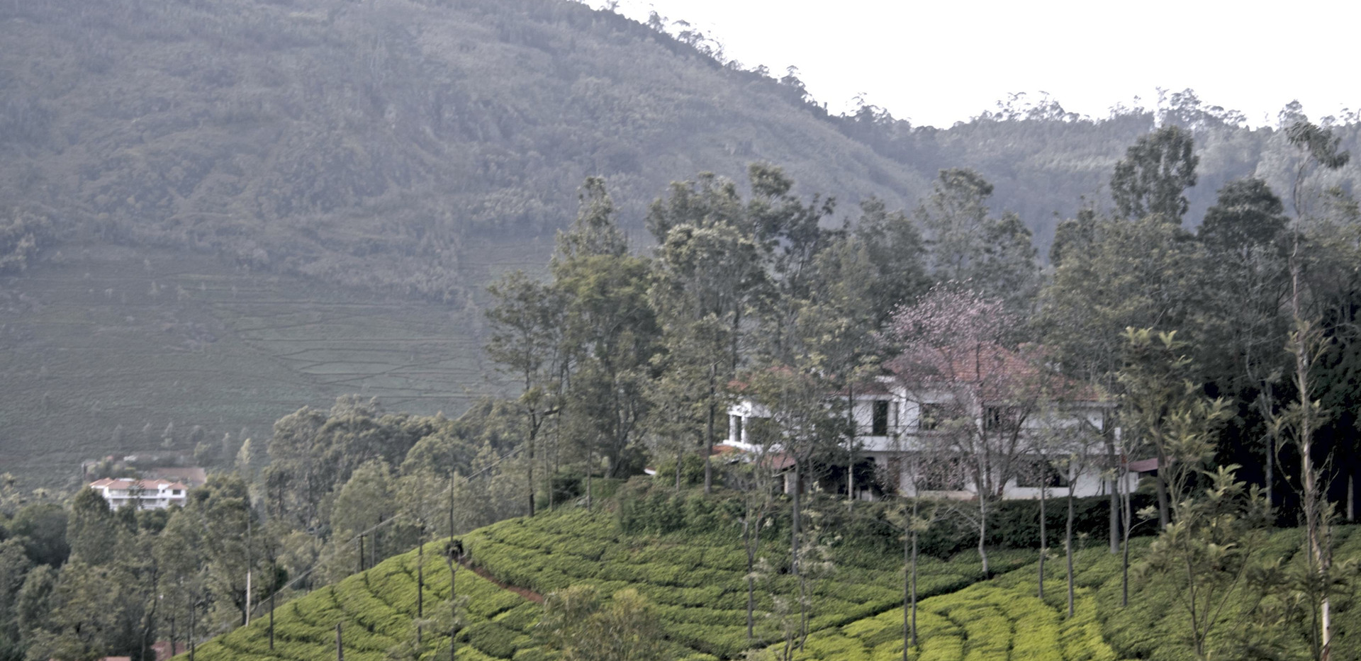 Tranquilitea-plantation-farm-stay-Coonoor