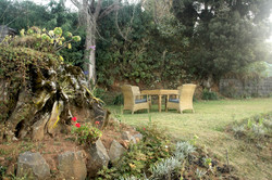the lawn at the bungalow in ooty