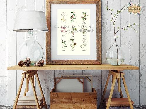 Květy z Provence A3, krém
