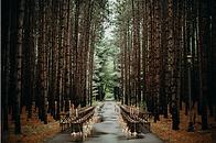 Lesní.png