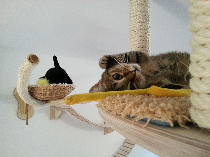 Kočičí stropní průlezky