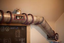 Kočičí transitní systém