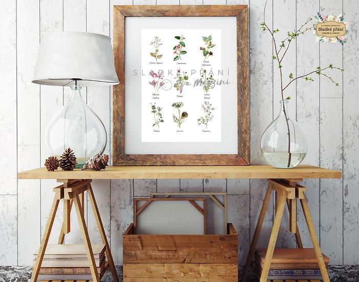 Květy z Provence A3, bílá