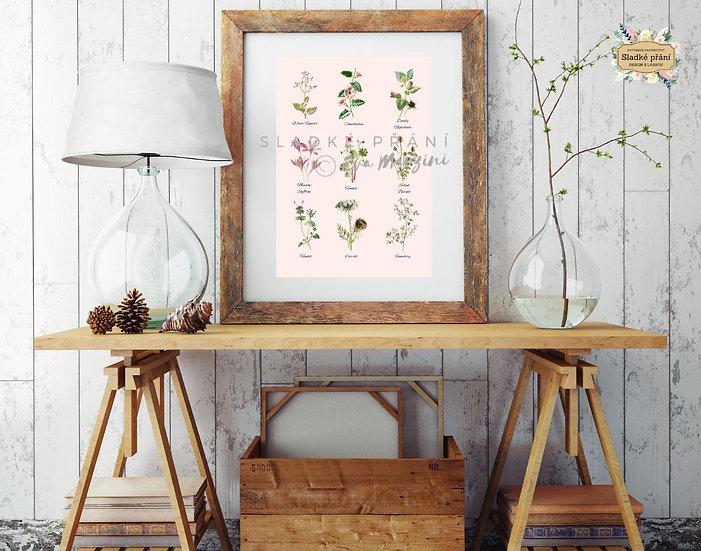 Květy z Provence A3, pudr