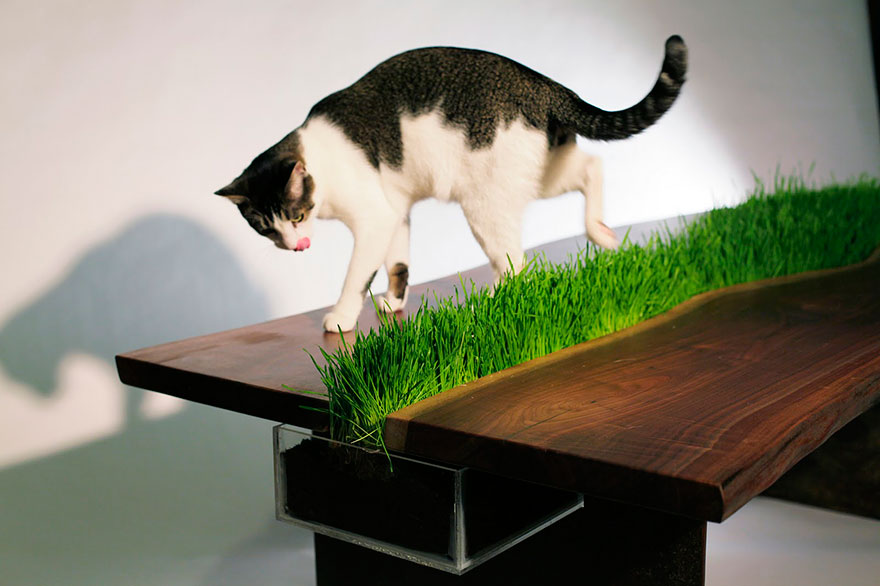 Travička na stole pro kočičky