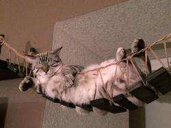 Kočičí most Indiana Jones
