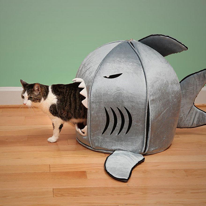 Kočičí žraločí pelíšek