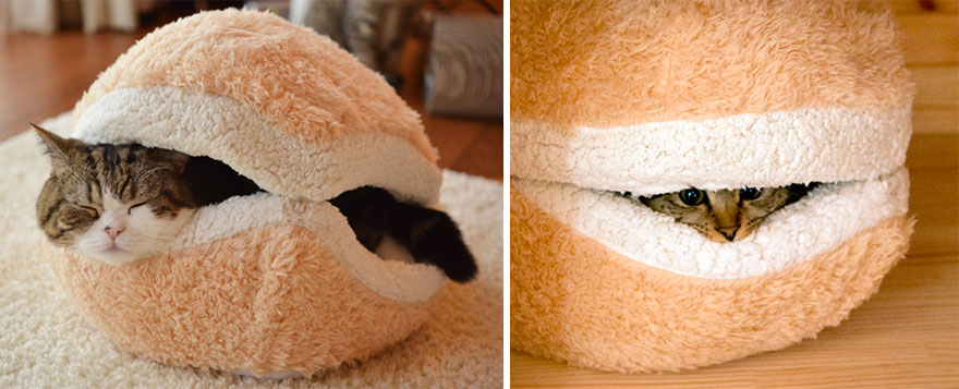 Hamburger - kočičí pelíšek