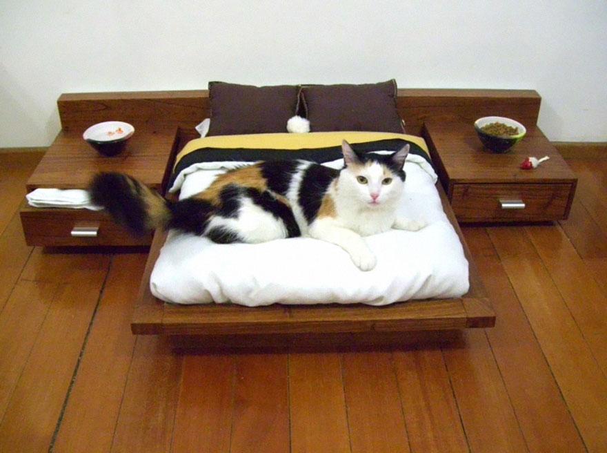 Malá kočičí ložnice