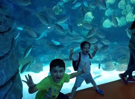 Our trip to Istanbul Aquarium!!