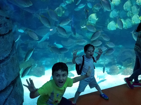 Our trip to Istanbul Aquarium!!