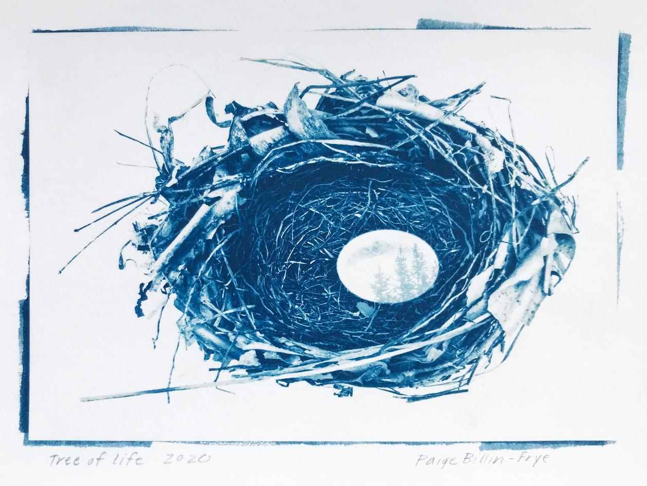 """Paige Billin-Frye  """"Tree of Life"""" Cyanotype"""