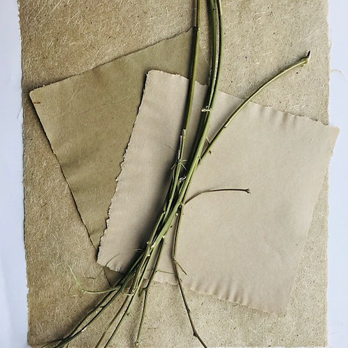 From Plants to Paper: Hemp Papermaking; Jun 5; 10am–4pm