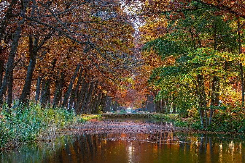 Herfst in Griendtsveen