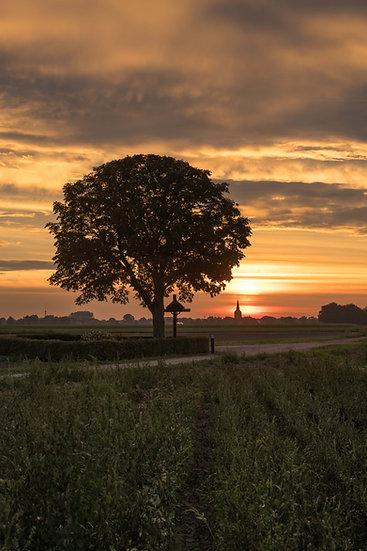 Kruusboom bij zonsopkomst