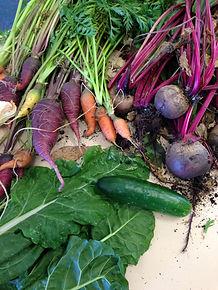 Home Grown Express Food Garden