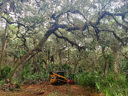 Land Clearing St. Augustine