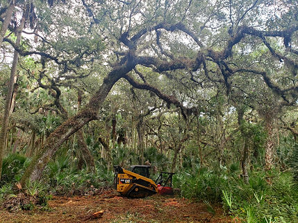 Lake county land clearing