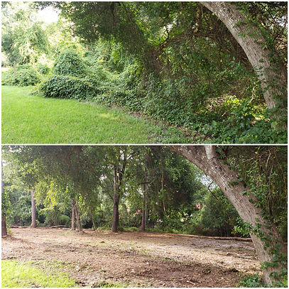St Johns County land clearing