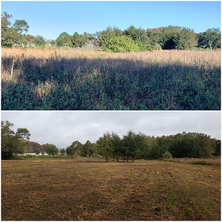 Lake County Land Clearing and Forestry Mulching