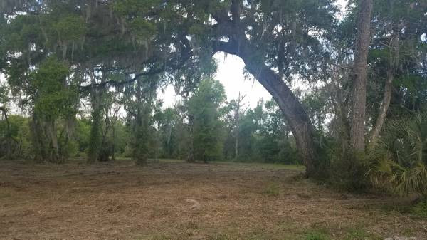 Land Clearing Contractor Amp Services In Deland Fl Free