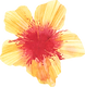 Yellow hibiscus.png