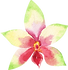 green orchid.png