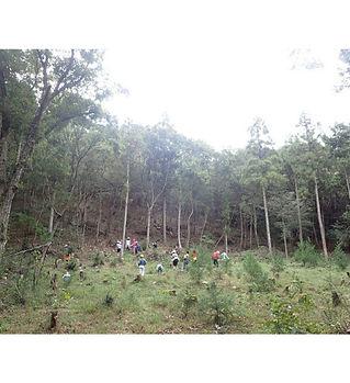 森づくりHP.jpg