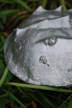 barnacle detail.jpg