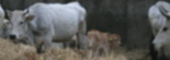 Stadsboerderij-Almere-Slide-1-1024x359.p