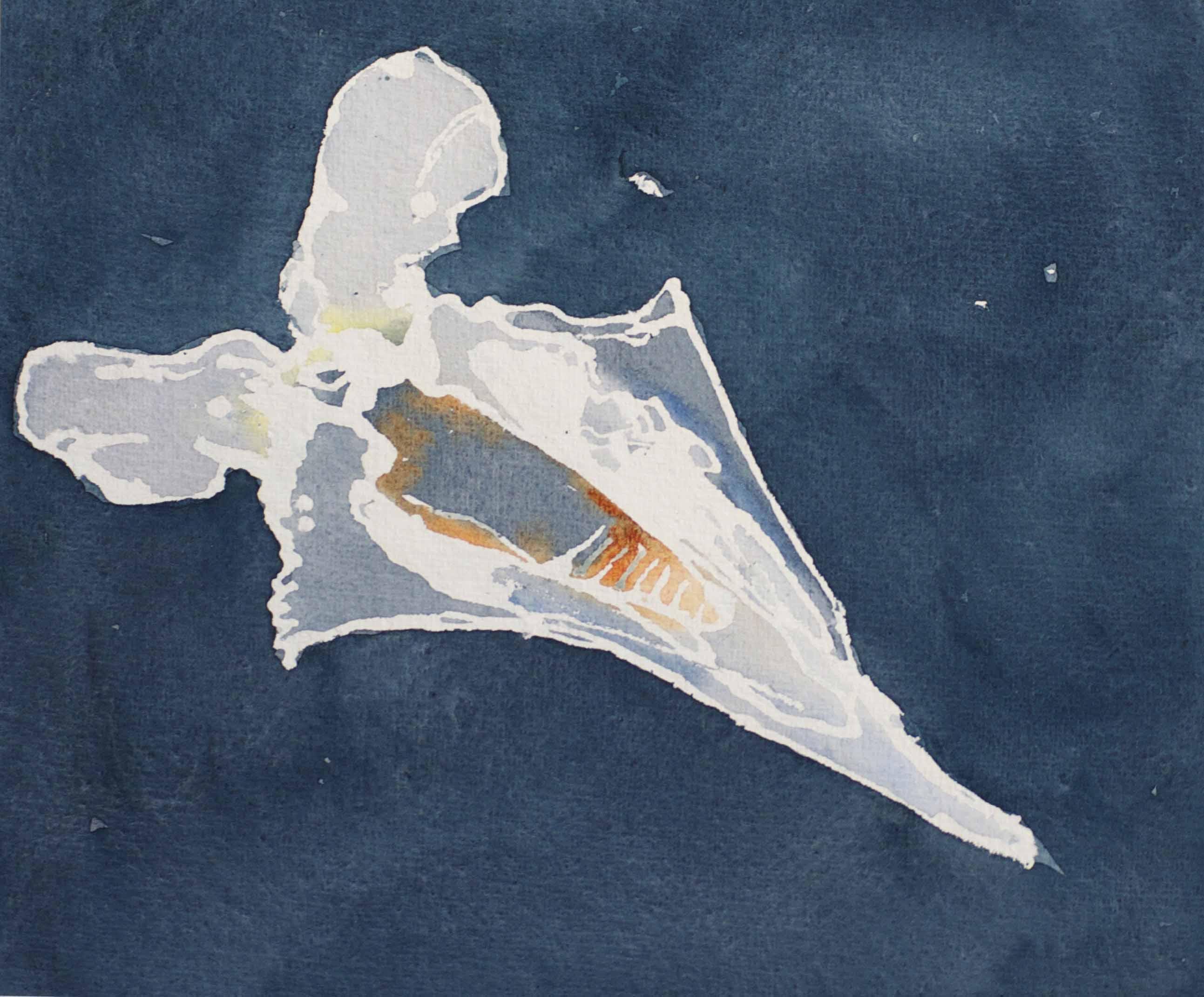 Plankton-Legend.jpg