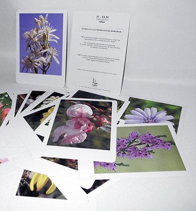 Las 38 tarjetas de las flores del Dr. Bach