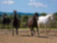 polmartin riding stables