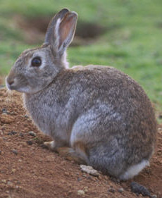 Rabbit1(1).jpg