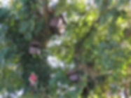 polruan holidays bird nesting boxes