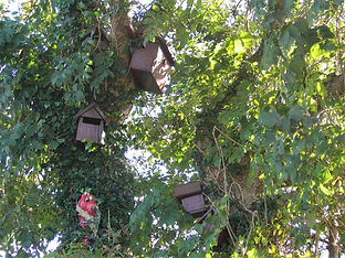 polruan holidays bird nesting boxes