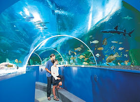 blue-reef-aquarium.jpg