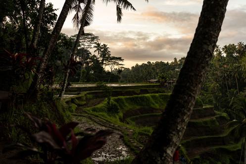 Bali 2020