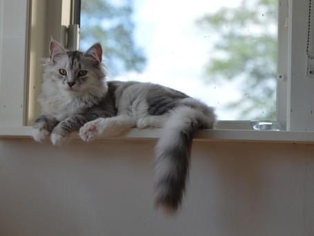 Mysig dag med katterna